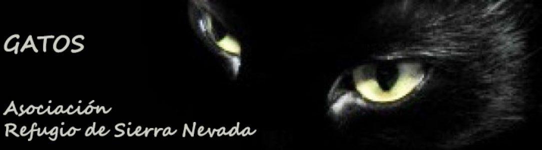 cropped-ojos2-1.jpg